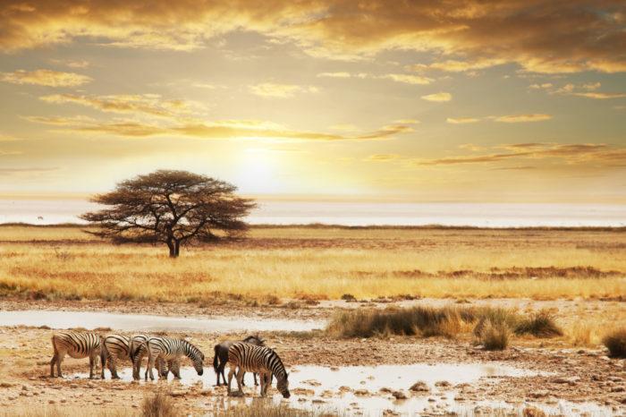 Trésors d'Afrique Australe <br/> <span style='font-size:20px;'>Namibie</span>