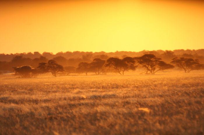 Trésors du Botswana <br/> <span style='font-size:20px;'>Botswana</span>