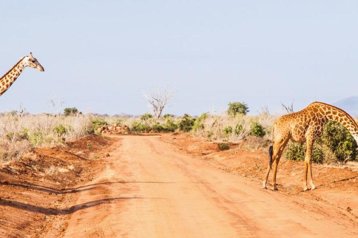 Safaris & Cocotiers <br/> <span style='font-size:20px;'>Kenya</span>