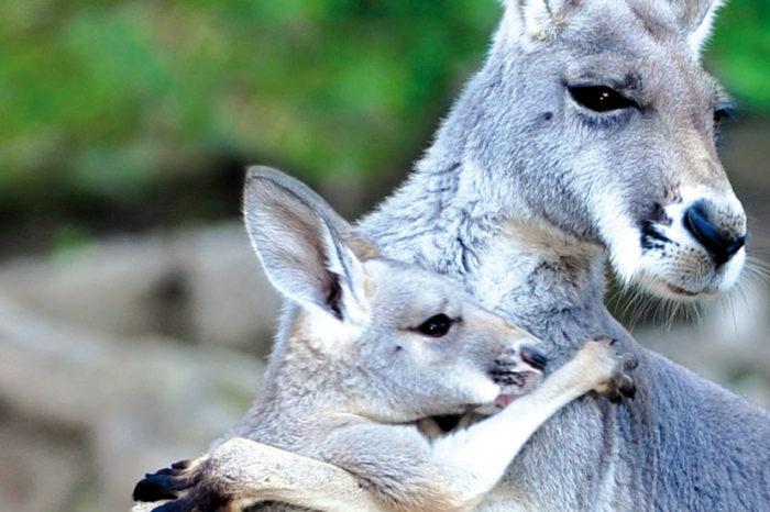 Au pays des kangourous <br/> <span style='font-size:20px;'>Australie </span>