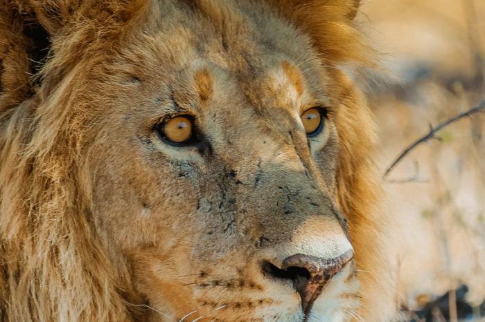 Ma Famille au Pays du Roi Lion <br/> <span style='font-size:20px;'>Tanzanie</span>