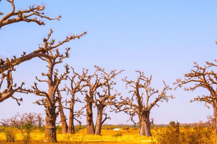 Ma Famille au Pays des Baobabs <br/> <span style='font-size:20px;'>Sénégal</span>