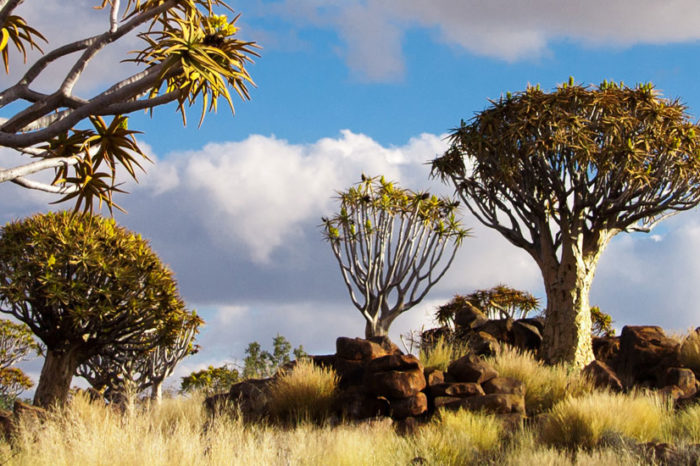 À la rencontre du Peuple Himba <br/> <span style='font-size:20px;'>Namibie</span>