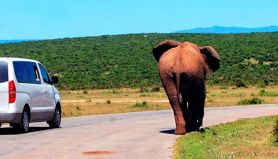 Comment circuler en Afrique du Sud