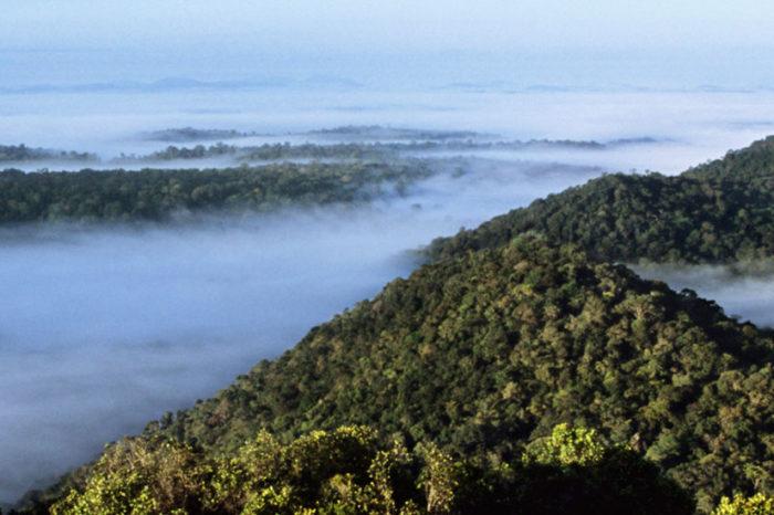 Randonnée à Saül <br/> <span style='font-size:20px;'>Guyane</span>